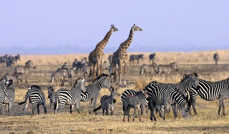 Best Africa tours
