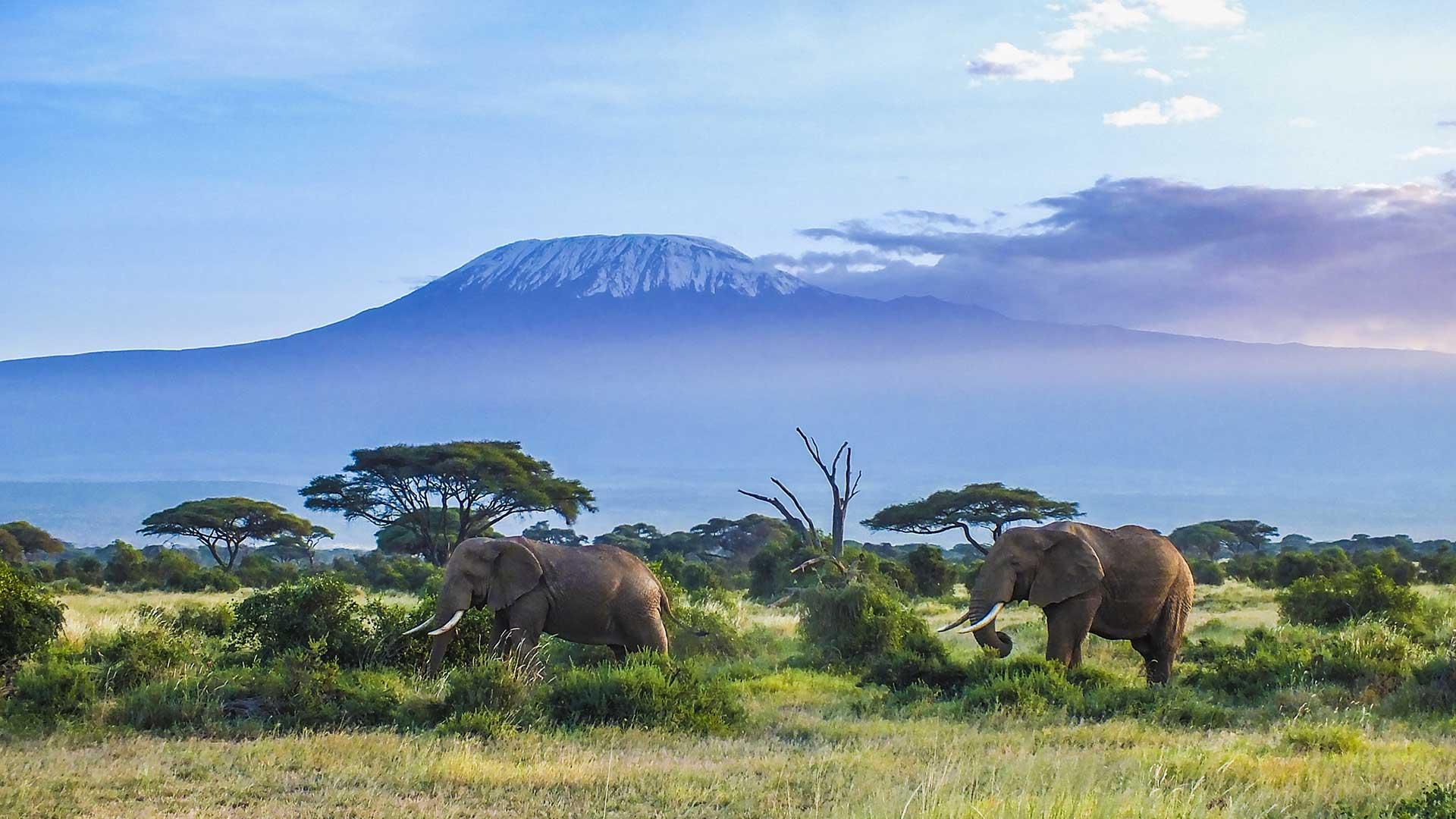 Kilimanjaro National Park TDS
