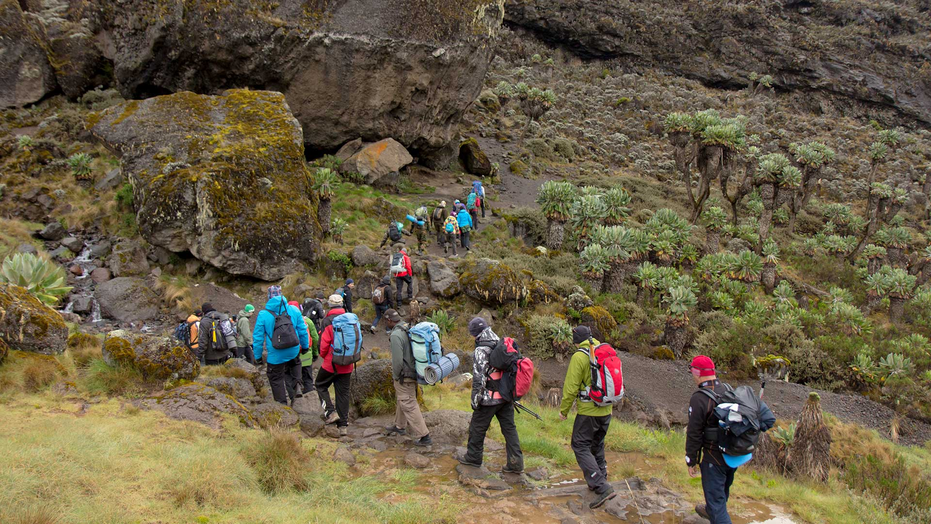 Kilimanjaro TDS
