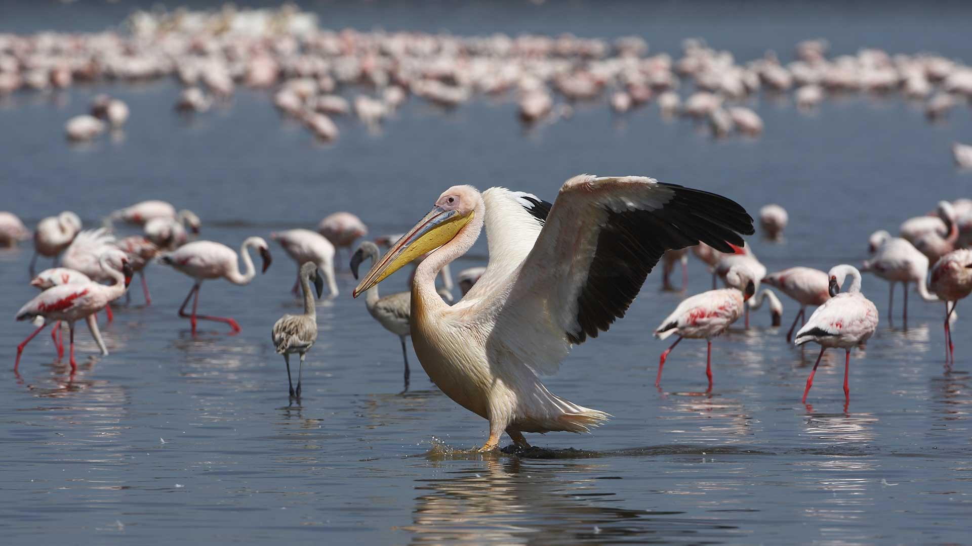 Lake Manyara TDS