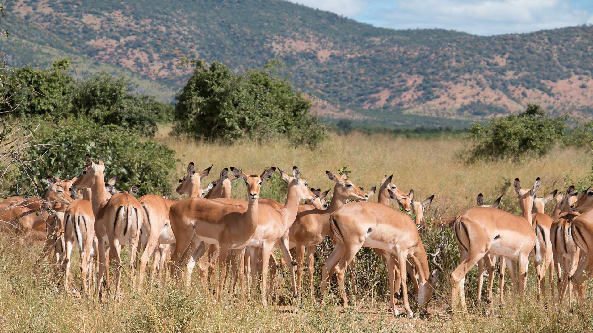 Mbomipa Wildlife TDS