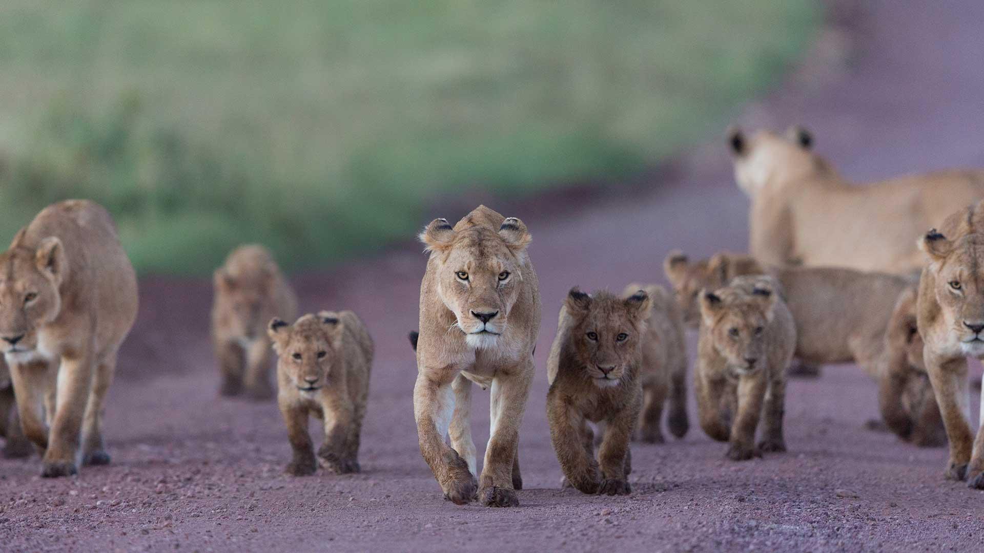 Ngorongoro Crater TDS