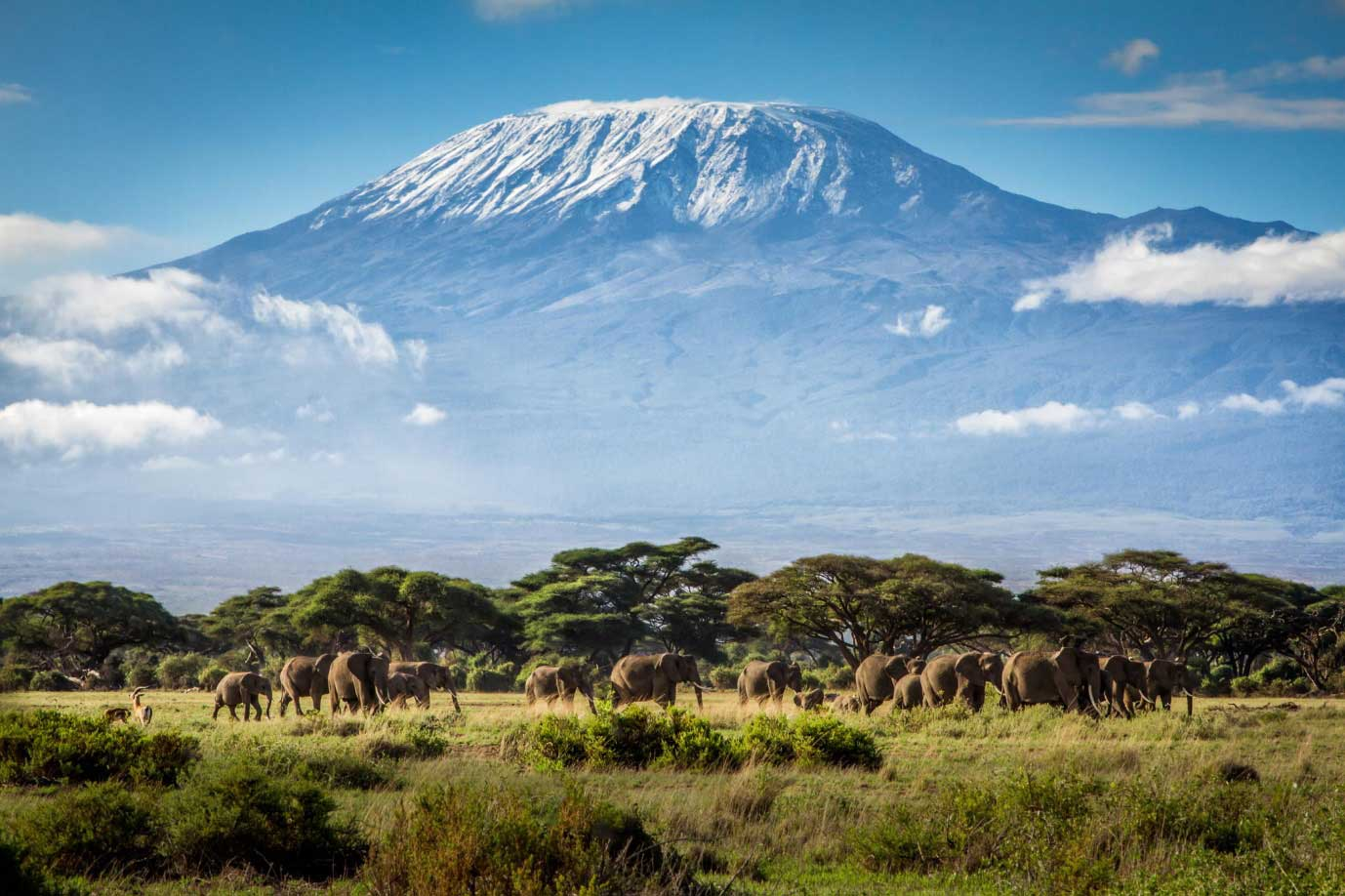 Royal Mount Kilimanjaro TDS