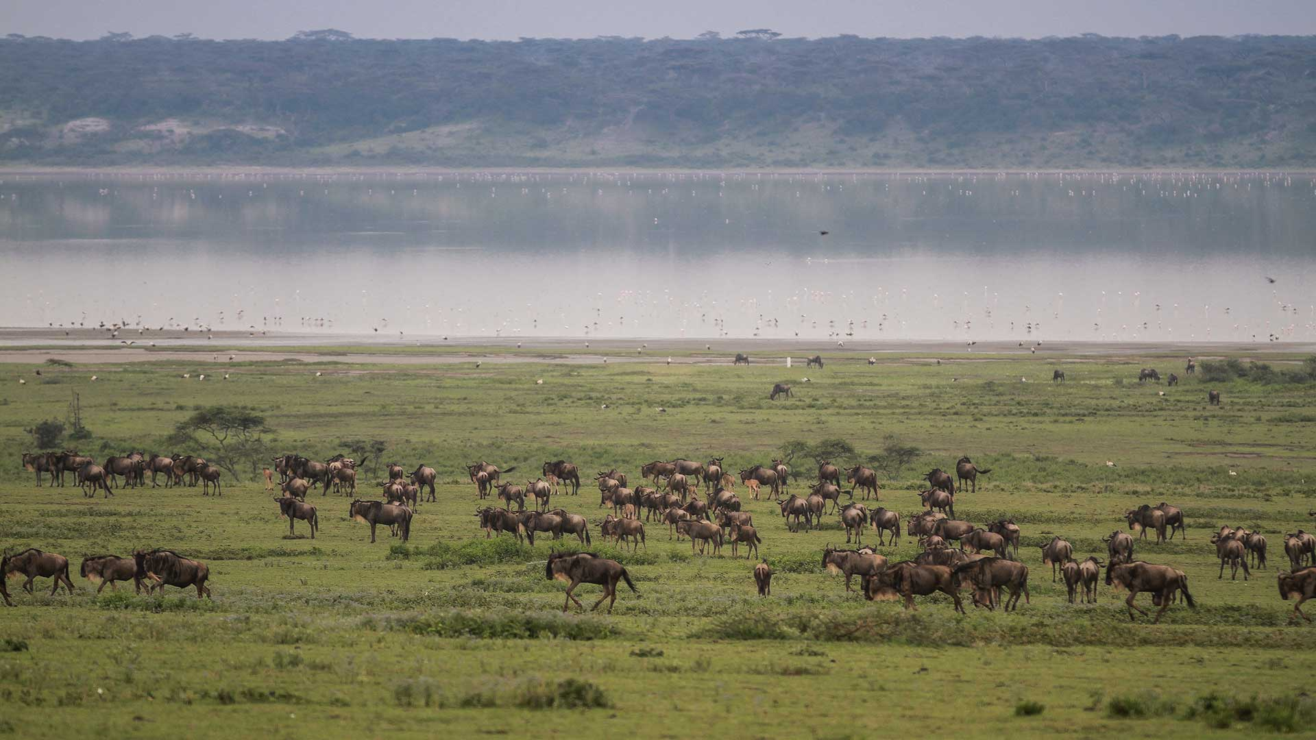 Serengeti National Park of Tanzania TDS