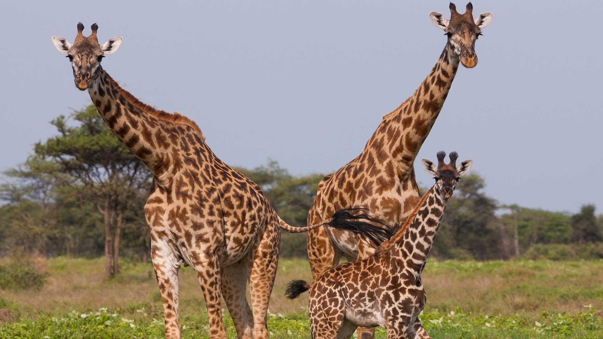 Tanzania Parks TDS