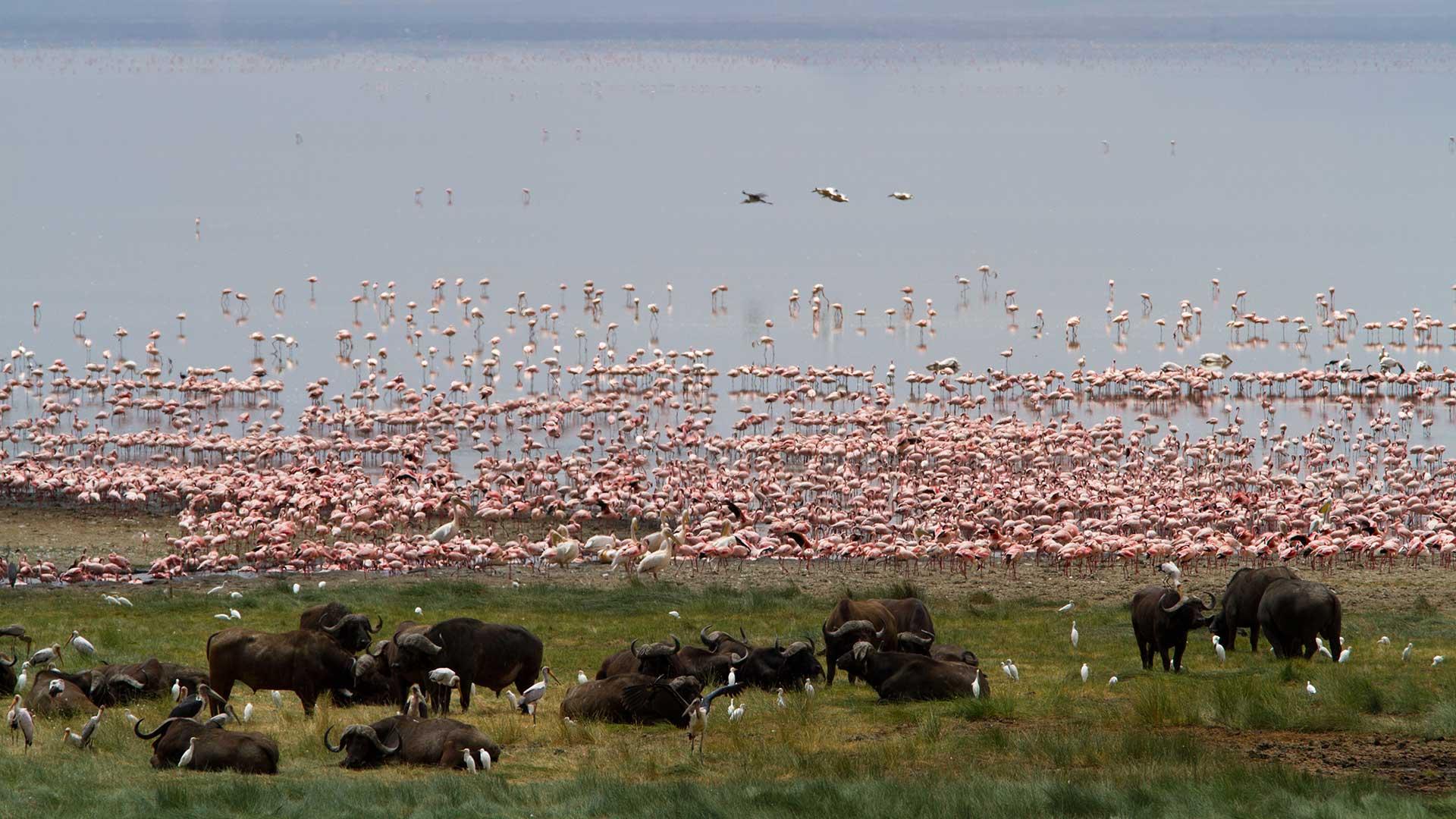 Tanzania federal park TDS