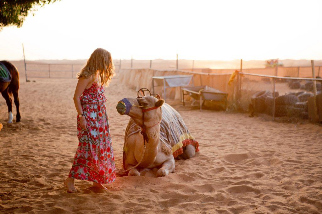 Desert safari in summer