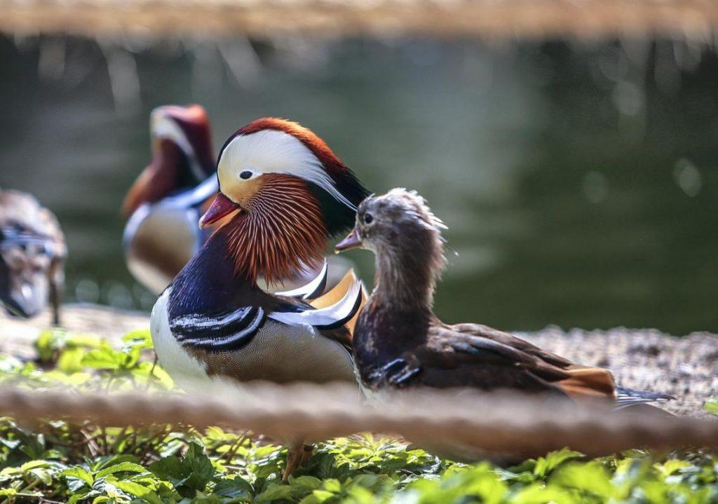 Birds at Safari Park