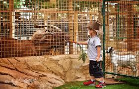 cages of Safari Park