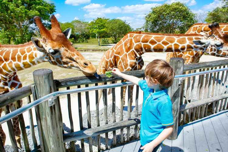 Interaction with Animals at Safari Park