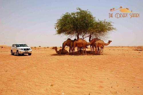 desert-tour-in-nissan-patrol